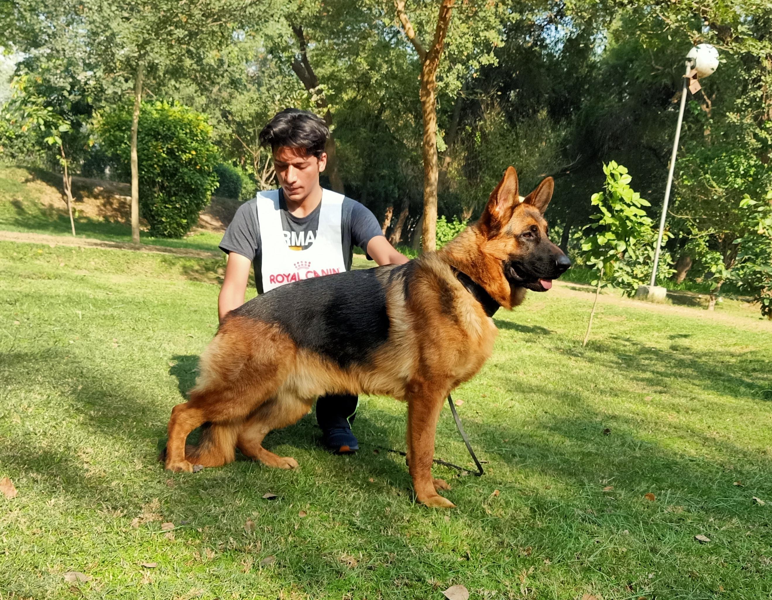 public/dog_images/12447/1609414117.IMG_20201220_204901.jpg