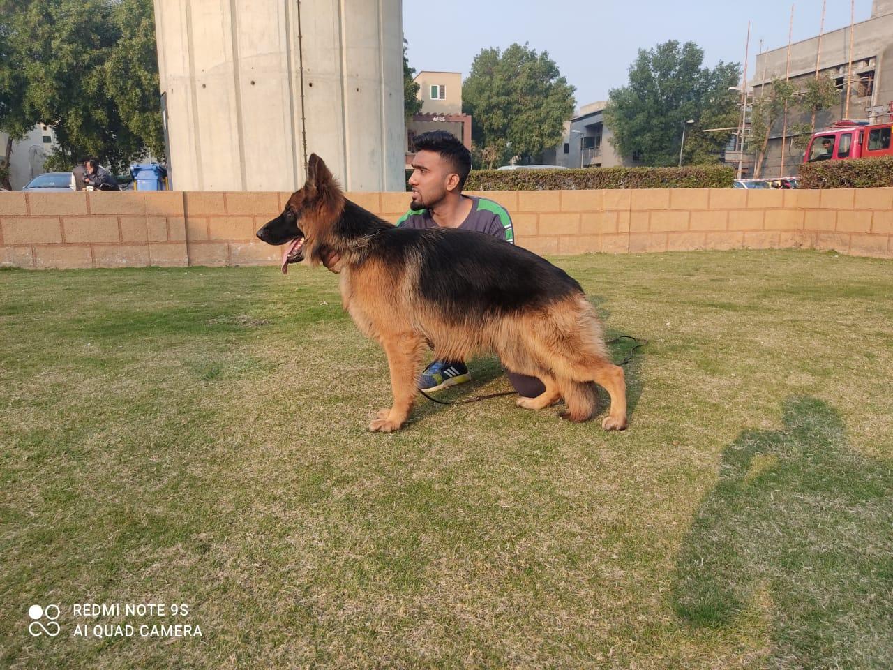 public/dog_images/12500/1618656356.09B29306-E75D-4588-A05A-8FEF63A65DA4.jpeg