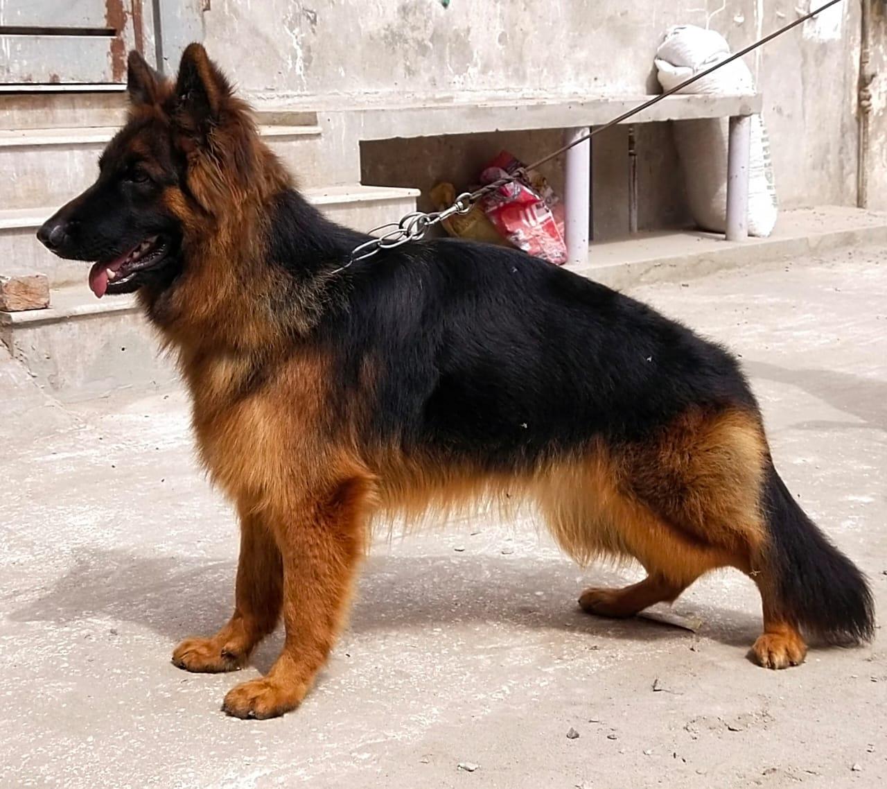public/dog_images/12515/1616744075.IMG-20210319-WA0048.jpg