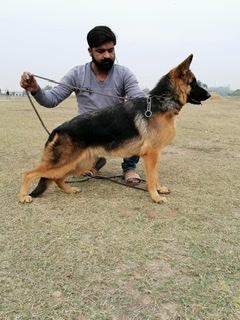 public/dog_images/12546/1C5B7C4A-FD3E-402F-AEAE-0F74AFFF5F1D.jpeg