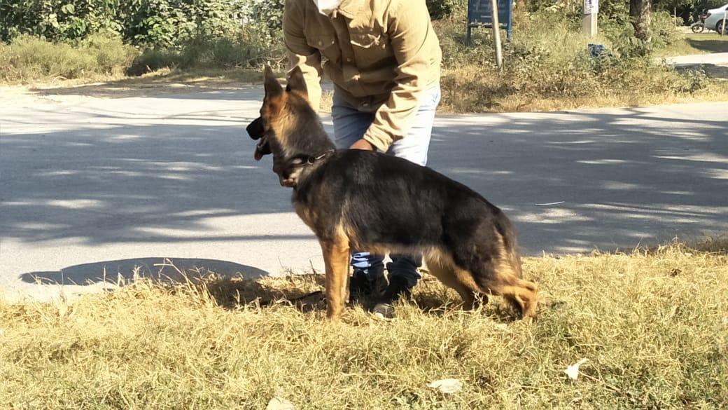 public/dog_images/12595/IMG-20201102-WA0011.jpg