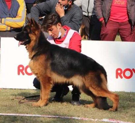 public/dog_images/12682/1609414764.IMG_20201231_163716.jpg