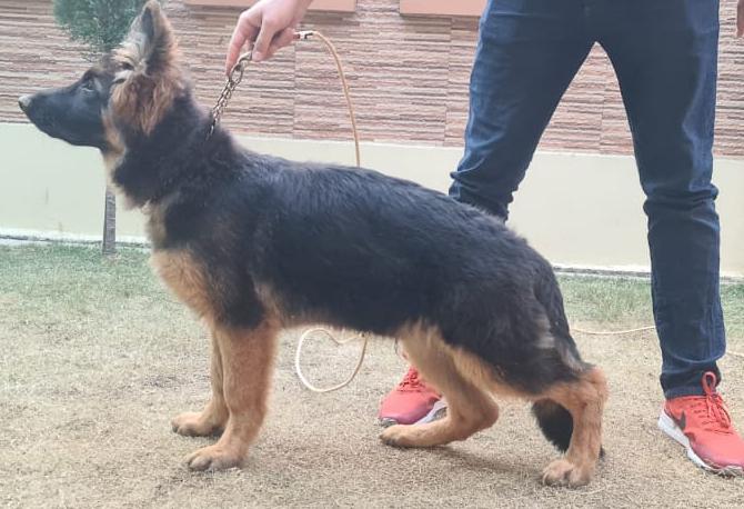 public/dog_images/12802/1610944297.20210117_175553.jpg
