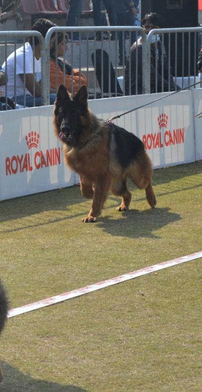 public/dog_images/12818/1633955480.grand-prix.jpg