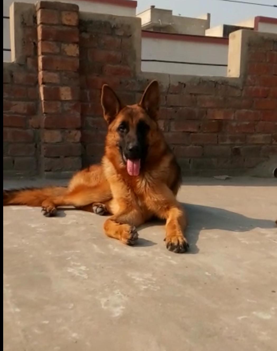 public/dog_images/12875/1612290573.IMG_20210129_012749.png