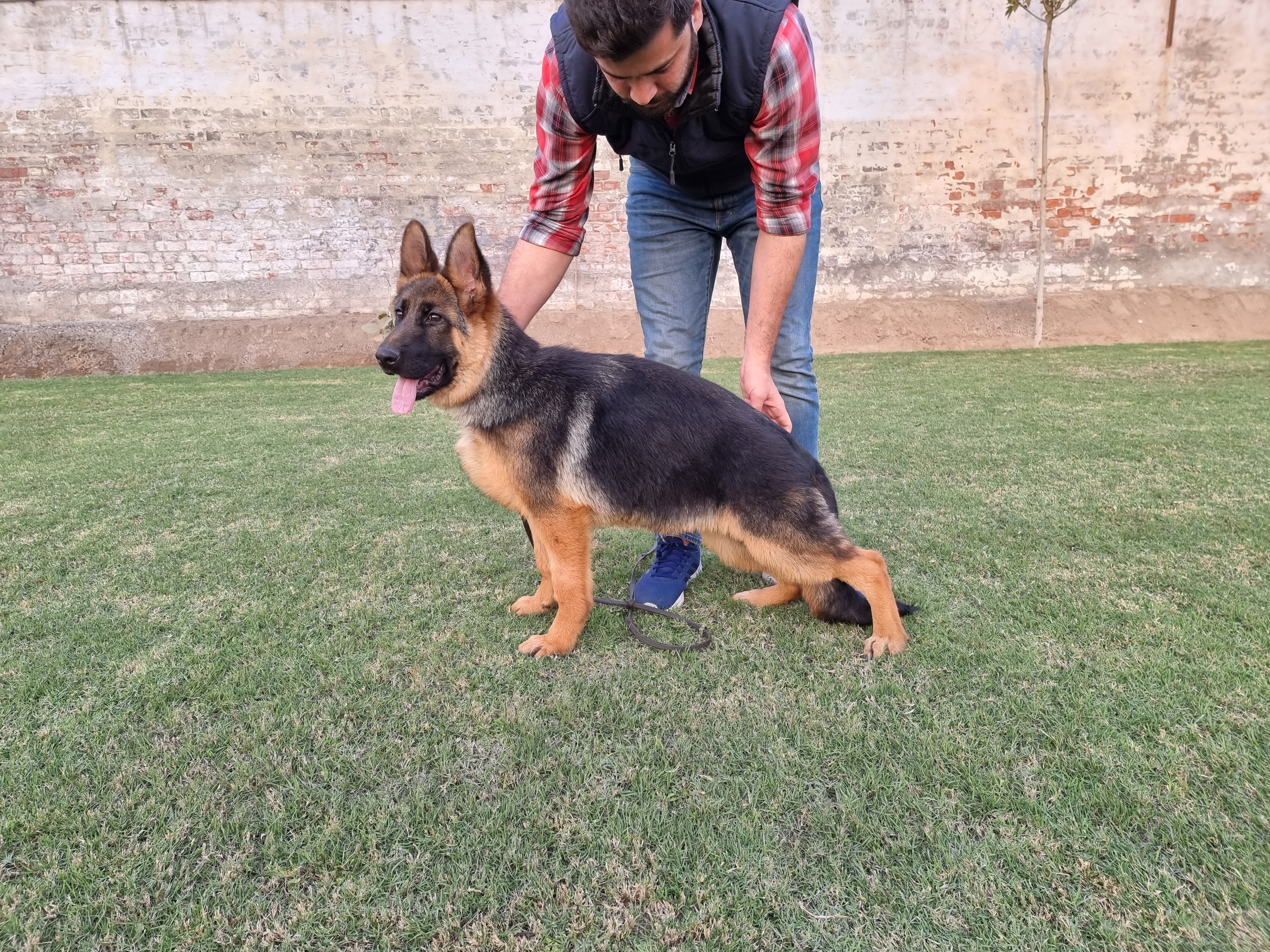public/dog_images/12879/1612823074.20210204_165836.jpg