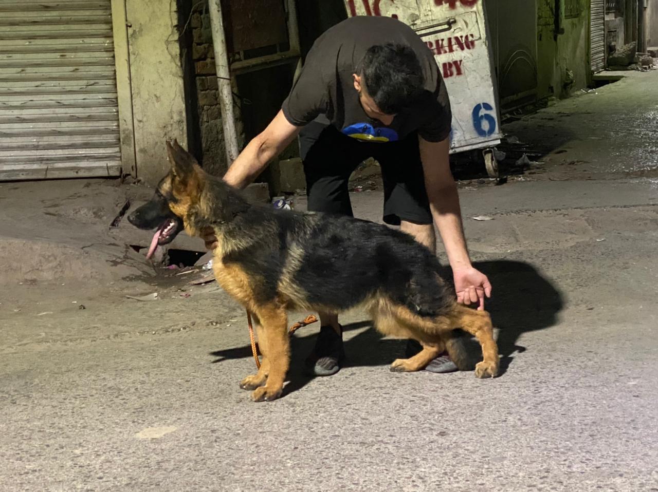 public/dog_images/13030/1622117866.IMG-20210514-WA0008.jpg