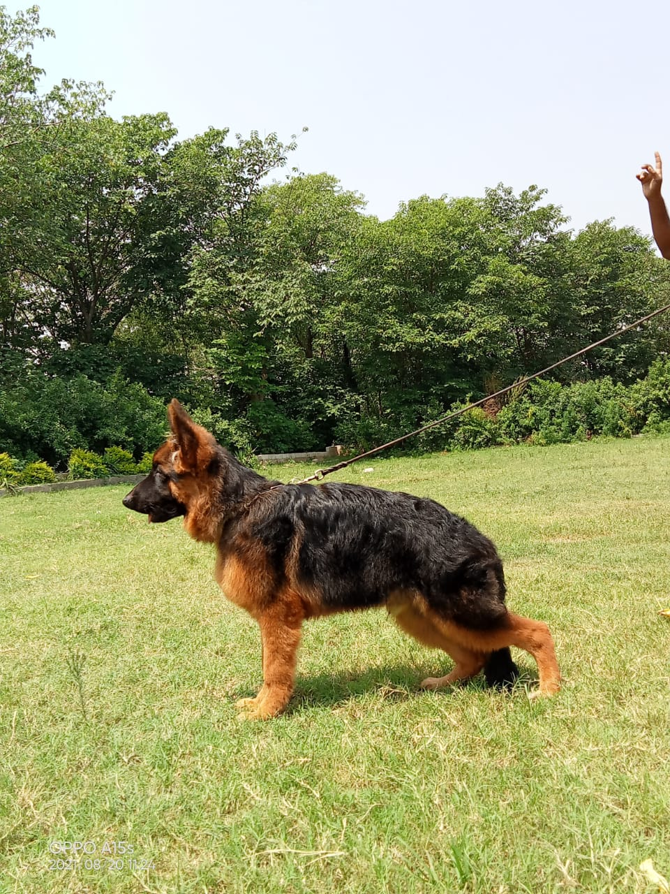 public/dog_images/13038/1631712743.IMG-20210902-WA0023.jpg