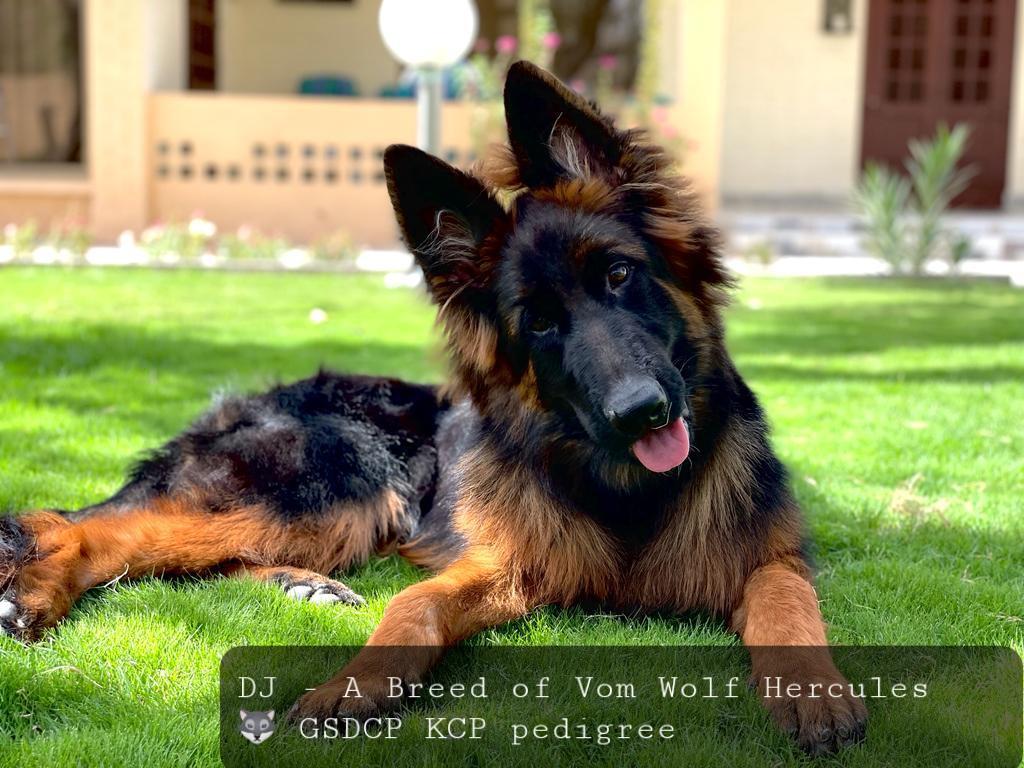 public/dog_images/13041/1632375487.20210923_103514.jpg