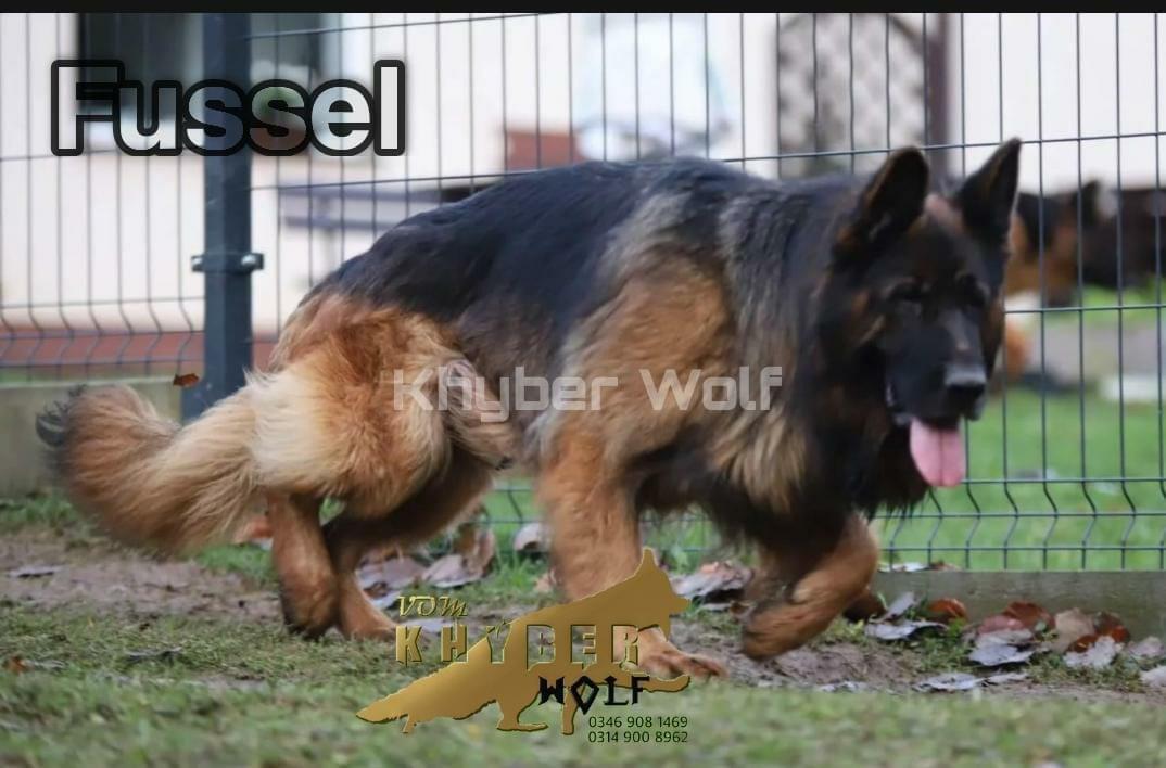 public/dog_images/13085/1619555151.IMG-20210428-WA0000.jpg