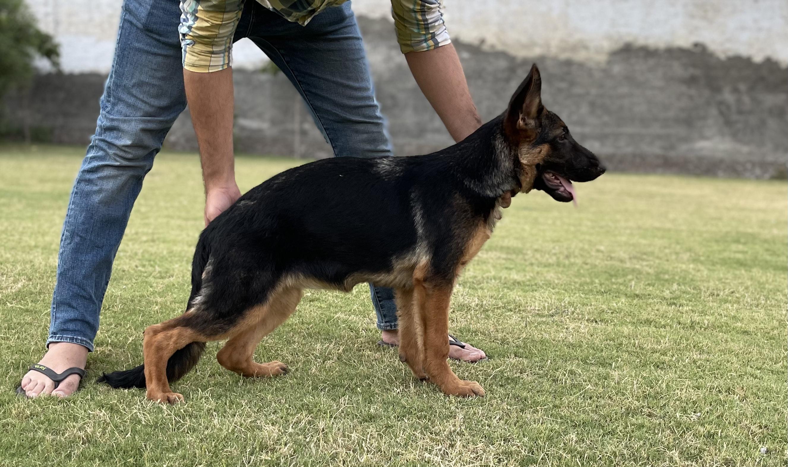 public/dog_images/13093/1621628763.9436CE97-7ACE-42A4-B0FF-E018D49CD51A.jpeg