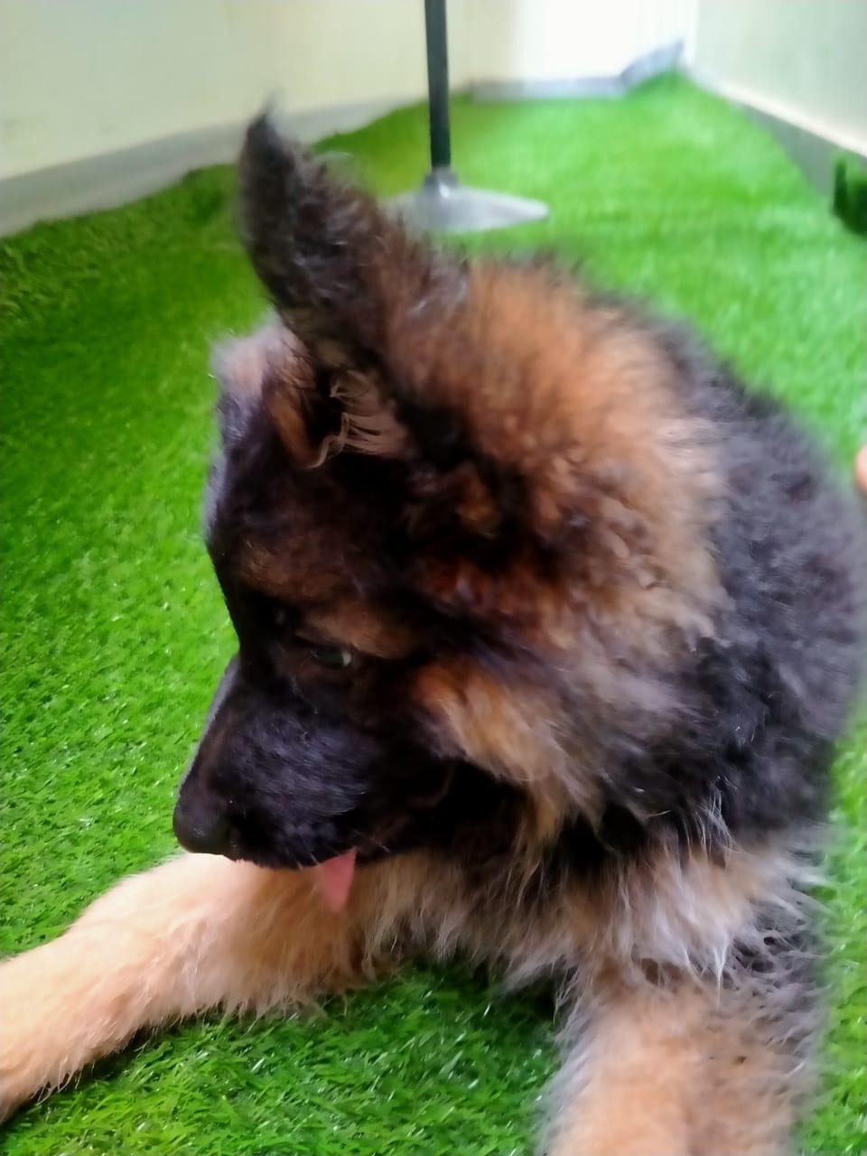 public/dog_images/13218/1623419843.PHOTO-2021-06-11-17-11-00.jpg